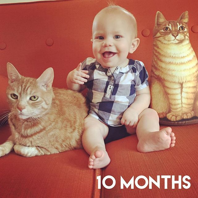 Instagram: Crazy cat lady at 10 months. #orangecatsandwich